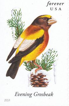 Evening Grosbeak stamps - mainly images - gallery format