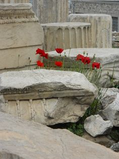 Greece ruins and poppies