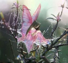 "I'm so glad that you thought you saw one of my fairies.  Her name is ""Dew''."