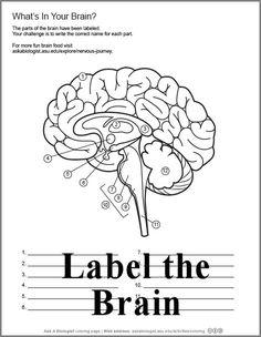 One of many 'body' downloads #homeschool #biology
