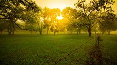 Early Morning Cypress Trees Near Medina TX [OC][5442x3061]