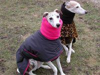 Blue Willow Dog Coats - Snow Angel - 3 layer warm winter dog coat