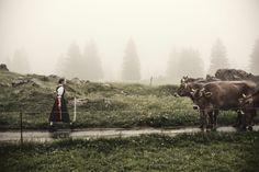 Eberle-Schmid Fotografie St.Gallen Animals, Elevator, Animales, Animaux, Animal, Animais, Dieren