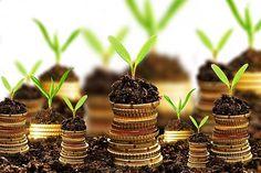 Culturile profitabile presupun, de multe ori, o investiție importantă, dar esențial pentru reușita afacerii este ca înființarea plantațiilor să se facă la momentul oportun. Astfel, o parte di