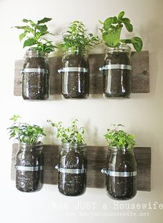 Wall planter - possibly for your herb garden? #Upcycle This! 16 Ways to Reuse Mason Jars