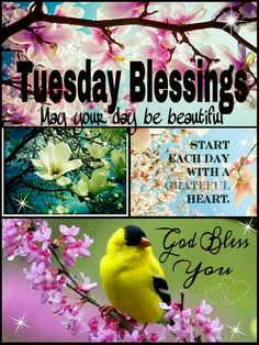 TUESDAY BLESSINGS. Start each day with a grateful heart. May your day be beautiful. God bless you!!