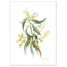 """Australian Wattle Watercolour painting - Limited edition print "" by Darlene Lavett. Paintings for Sale. Watercolour Painting, Watercolor Flowers, Framed Artwork, Framed Prints, Australian Native Flowers, Detailed Drawings, Buy Art Online, Native Art, Limited Edition Prints"