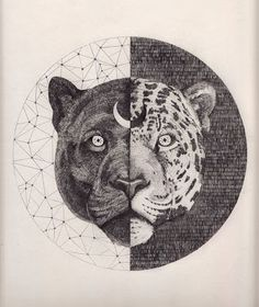 SINCRONIA: EL CAMINO DEL GUERRERO LUMINOSO - Imagen: Leopard by Peter Carrington, ilustración, grafito sobre papel, 2012