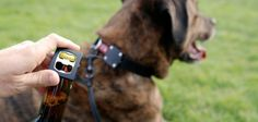 The BEST dog collar and bottle opener in one!