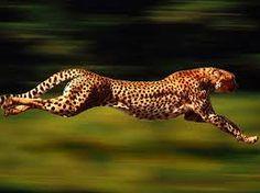 Mój ukochany sprinter:-*