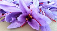 Saffron on terrace? Yes we can - - How to grow your own Saffron the best way! Organic Gardening, Gardening Tips, Vegetable Gardening, Urban Gardening, Natural Ecosystem, Yard Care, Survival Prepping, Survival Shelter, Survival Skills