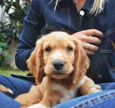 Mans Best Friend, Girls Best Friend, Doggies, Dogs And Puppies, Psychic Readings, Paw Prints, Rainbow Dash, Puppys, Cute Baby Animals