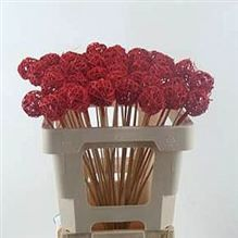 Grassball Picks - red - there are tonnes of Picks in this month in varieties of colours and sizes - just take a look at our website for further ideas and inspiration to create your Christmas Extravaganza!