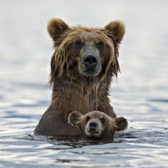 Funny pictures about 25 Of The Best Parenting Moments In The Animal Kingdom. Oh, and cool pics about 25 Of The Best Parenting Moments In The Animal Kingdom. Also, 25 Of The Best Parenting Moments In The Animal Kingdom photos. Baby Animals, Funny Animals, Cute Animals, Wild Animals, Animal Babies, National Geographic Fotos, Photo Ours, Animal Pictures, Cute Pictures