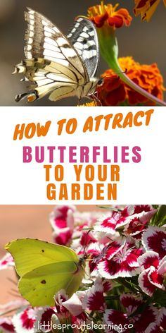 What is more amazing than watchinggorgeous, graceful butterflies flitter around in your garden? Butterflies are good for much more than justbeauty as they are one of the best pollinators for your garden. If you want to attract butterflies to your garden, check this out.