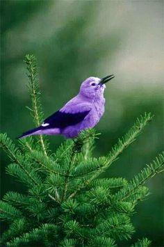 BirdS Sing after a storm
