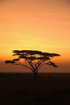 Sunset on the Serengeti, Acacia Tree in the Foreground