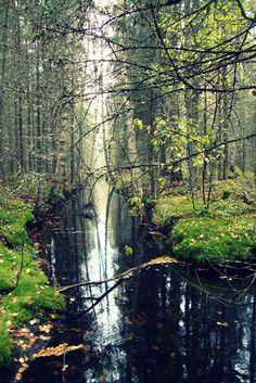Isojärven kansallispuisto, Suomi Finland    satumetsä <3