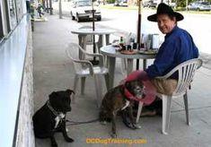 Long Beach, CA. Dog Training