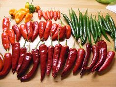 homegrown chillies at Allotment Heaven