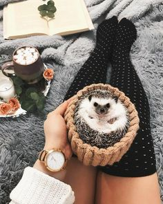Discovered by αη∂яεα αℓsα. Find images and videos about cute, adorable and animal on We Heart It - the app to get lost in what you love. Hedgehog Care, Pygmy Hedgehog, Cute Hedgehog, Hedgehog Pet Cage, Cute Little Animals, Cute Funny Animals, Cute Animal Photos, Cute Creatures, Animals Beautiful