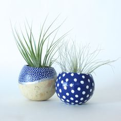 Air Plant Planter Duo with Air Plants Blue by ThriftedandMade, $28.00