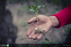 Soil may not grab headlines. But if we want to feed the world, we must keep soil healthy. https://global.nature.org/content/rethinking-soil