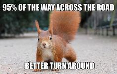 Squirrel logic.
