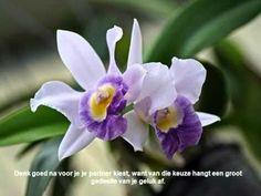 Orchideeën met bedenkingen