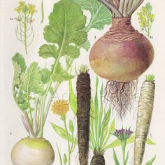 Vintage Vegetable Food Botanical Print Book by AgedPage on Etsy