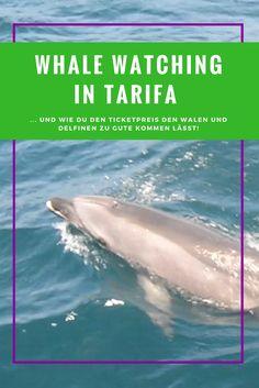 Whale Watching in Spanien. Tarifa ist ein toller Ausgangspunkt um Wale und Delfine in der Straße von Gibraltar zu sehen. Die Stiftung Firmm verwendet den Ticketpreis komplett zum Schutz der Meeressäuger // Whalewatching Spain