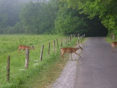 Cades Cove in TN in Smokey Mountains. This 11.2 ish mile paved loop, called The Loop, can be biked or driven, can stop halfway through to hike Abram's Falls for a swim and visit historical cabins.  Usually see deer and sometimes bear along the way. I used to bike it all the time as a kid when we camped there.  Nothing like it anywhere else.