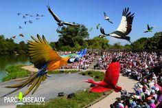 Parc des Oiseaux - Villars-les-Dombes, France