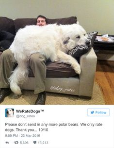 Pics and vids of big dogs that think they're lap dogs. Huge Dogs, Giant Dogs, I Love Dogs, Cute Big Dogs, Big Fluffy Dogs, Funny Dogs, Funny Animals, Cute Animals, Funny Memes