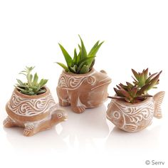 Pond Critter Planters | Set of 3 little terra cotta planters are ready to hold your favorite plants! Each has whitewash finish and a small drainage hole on bottom.serrv.org