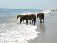 Assateague Island, where the wild horses roam. My dream place ever since I was young.