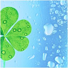 The symbolic meaning of clover may deal with spiritual development, but the use of the clover's trefoil growth might not have been original to Saint Patrick.