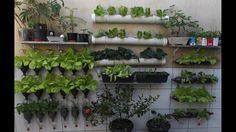 Bottle Gardens-  3  Simple Tips for a Successful Vegetable Garden