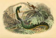 reptilesand_amphibias-00732  boa canina boa aurantiaca boa