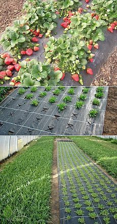 Agrofiber - gardening - jewellery - Garden Design Tips Vegetable Garden Design, Veg Garden, Edible Garden, Garden Beds, Garden Basket, Outdoor Plants, Outdoor Gardens, Indoor Garden, Strawberry Garden