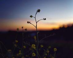 49.9K vind-ik-leuks, 108 reacties - Nathaniel Buzolic (@natebuzz) op Instagram: 'This sunset is yours. #buzolicphoto'