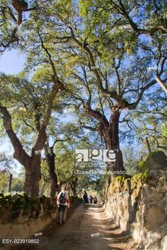 Treeking on Natural environment in Valencia de Alcantara between granitic batholiths and...