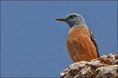 Salida ornitológica Araós-Bonaigua 14 y 15 de junio 2014