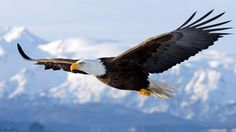We've got to fly like the Eagle