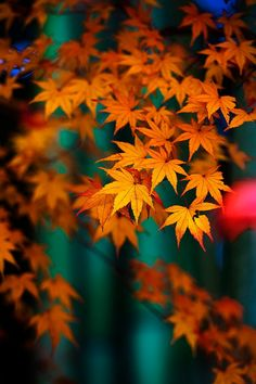 Fall leaves on teal background Light Background Images, Teal Background, Fall Pictures, Nature Pictures, Autumn Scenes, Beautiful Nature Wallpaper, Fall Wallpaper, Leaves Wallpaper, Autumn Photography