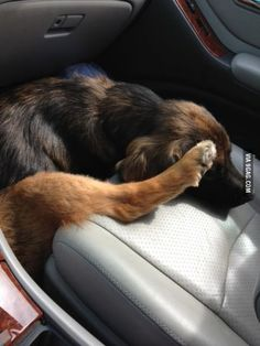 She slid off the seat when I stopped short... no f**ks given