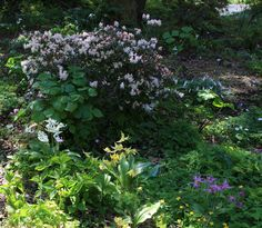 By Nikki Phipps (Author of The Bulb-o-licious Garden) Do you have large trees or unused wooded areas in your yard? Put them to use by creating a woodland garden. These garden designs provide a more relaxed and natural look to your landscape, and as a bonus, many of the carefree plants that are used make…
