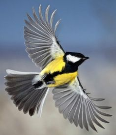 Yellow bird in flight