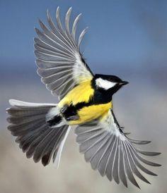 Yellow bird in flight