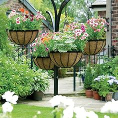 Plants For Hanging Baskets, Hanging Flowers, Hanging Planters, Hanging Plants Outdoor, Wire Baskets, Hanging Wire, Plant Troughs, Chlorophytum, Garden Planters